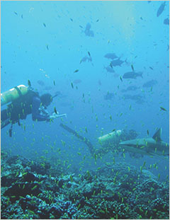 Cover - Human, Oceanographic and Habitat Drivers of Central and Western Pacific Coral Reef Fish Assemblages