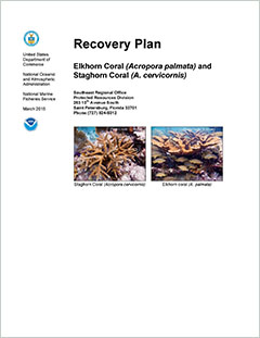 Cover - Recovery Plan for Elkhorn (Acropora palmata) and Staghorn (A. cervicornis) Corals