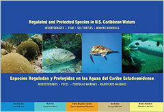 Cover - Regulated and Protected Species in U.S. Caribbean Waters: Invertebrates, Fish, Sea Turtles, Marine Mammals