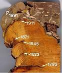 Fire-scarred cross section from a ponderosa pine (photo © P.M. Brown).