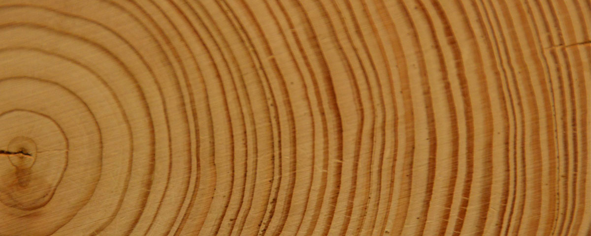 Photo of tree rings