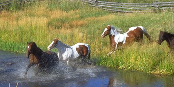 Picture of horses running