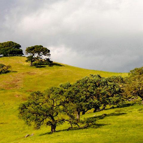 Photo of California hills