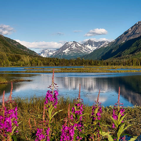 Photo of Chugach National Forest in Alaska
