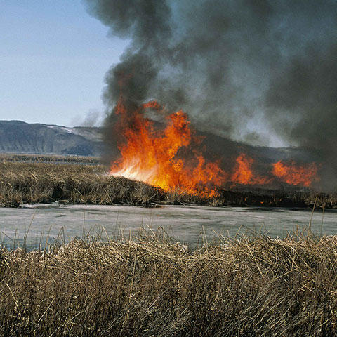 Photo of a grass wildfire