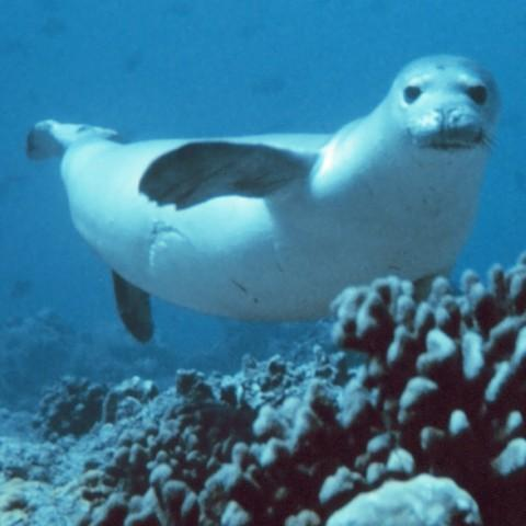 Image of a seal in the ocean