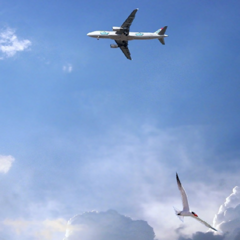 Picture of Plane and Bird Flying