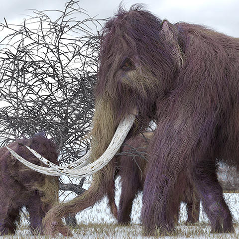 Artistic rendering of woolly mammoths grazing