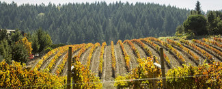 Picture of California vineyard