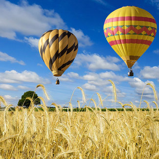 Picture of hot air balloons over a wheat field