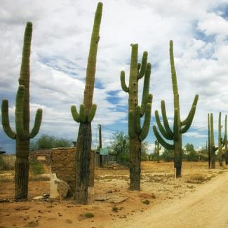 Photo of desert cacti and road