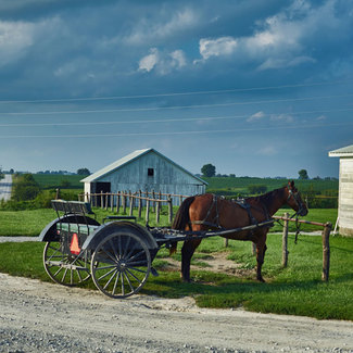 Picture of horse and open buggy