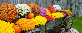 Picture of flowers and pumpkins in a wagon