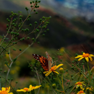 Picture of a butterfly on a flower