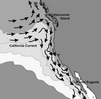Graphic of the California Current System