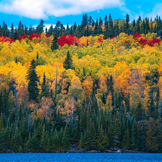 Picture of a forest showing fall colors