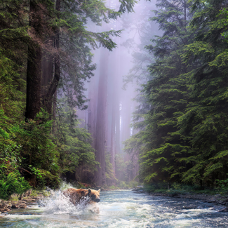 Picture of a bear in a forest stream