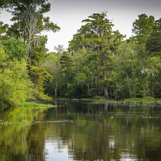Picture of a Louisiana bayou