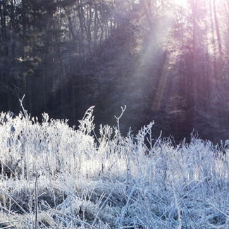 Picture of a frozen meadow