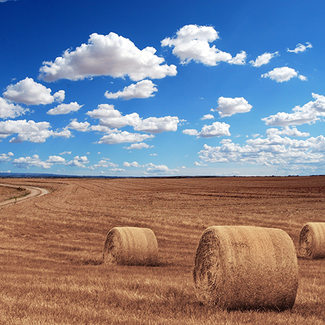 Picture of hay in a field
