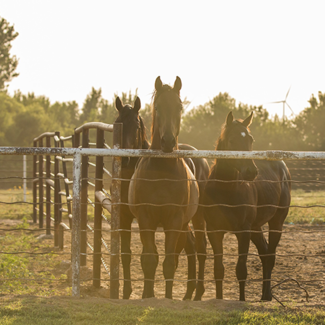 Picture of horses behind a fence