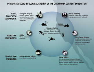Graphic of the Integrated Socio-ecological System of the California Current