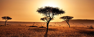 Picture of savannah in Kenya, Africa