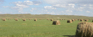 Photo of bales of hay in green pasture