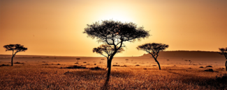 Picture of a tree in Kenya