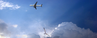 Picture of Plane and Bird Flying-Pixabay.com