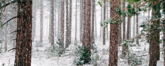 Picture of snowy woods