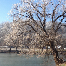 Photo of frost on an Arkansas lake in winter
