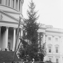 Photo of the first Capitol Christmas Tree in Washington, DC, in 1913