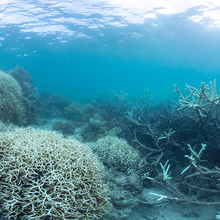 Photo of coral bleaching on the Great Barrier Reef, ©The Ocean Agency