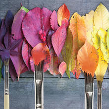 Photo of leaves and paint brushes in a rainbow of colors