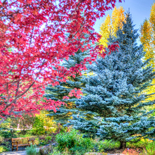Photo of Vail, Colorado, autumn forest foliage
