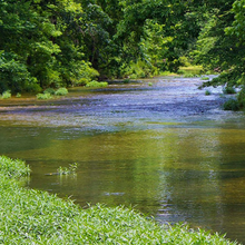Photo of a river in a forest in Oklahoma