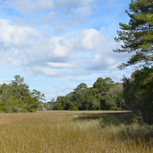 Photo of a South Carolina field landscape