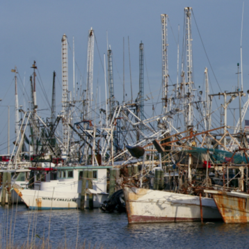 Image of Gulf shrimp boats docked in water. By Barbara Ambrose for NOAA NCEI.