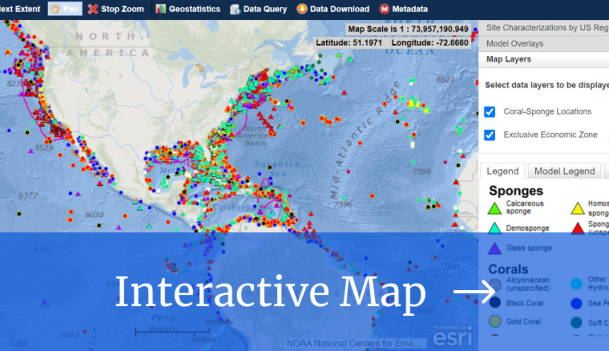 Deap Sea Coral and Sponge Portal preview image with a link to the interactive map