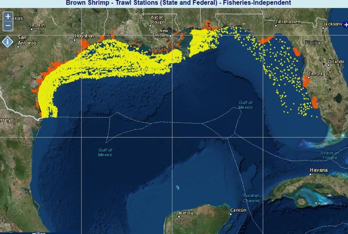 Map from Gulf of Mexico Data Atlas of Brown Shrimp Populations, NOAA