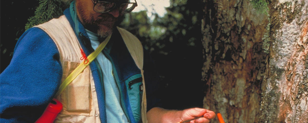 Scientist taking a tree ring sample