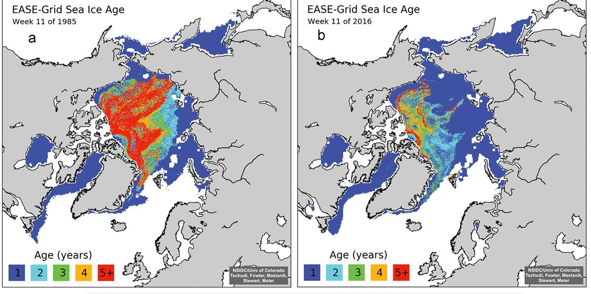 Sea ice age coverage map comparing sea ice coverage in March 1985 to March 2016.